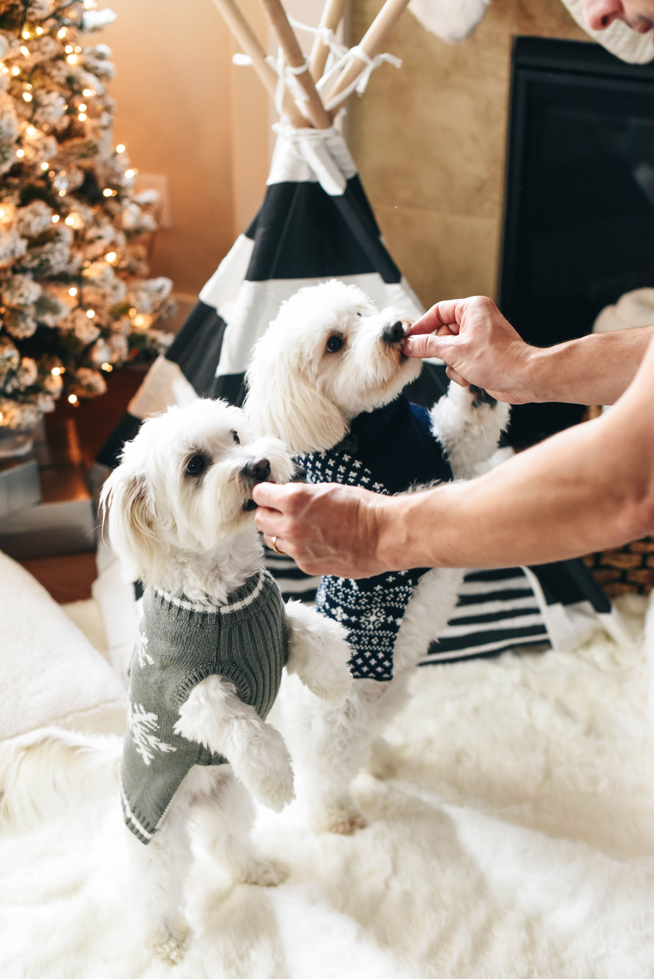 crystalin-marie-dogs-in-sweaters