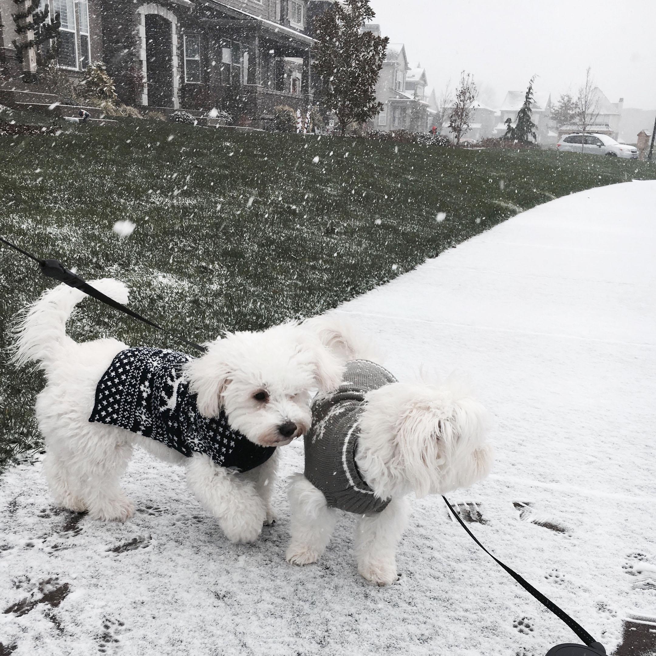 Crystalin Marie's dogs