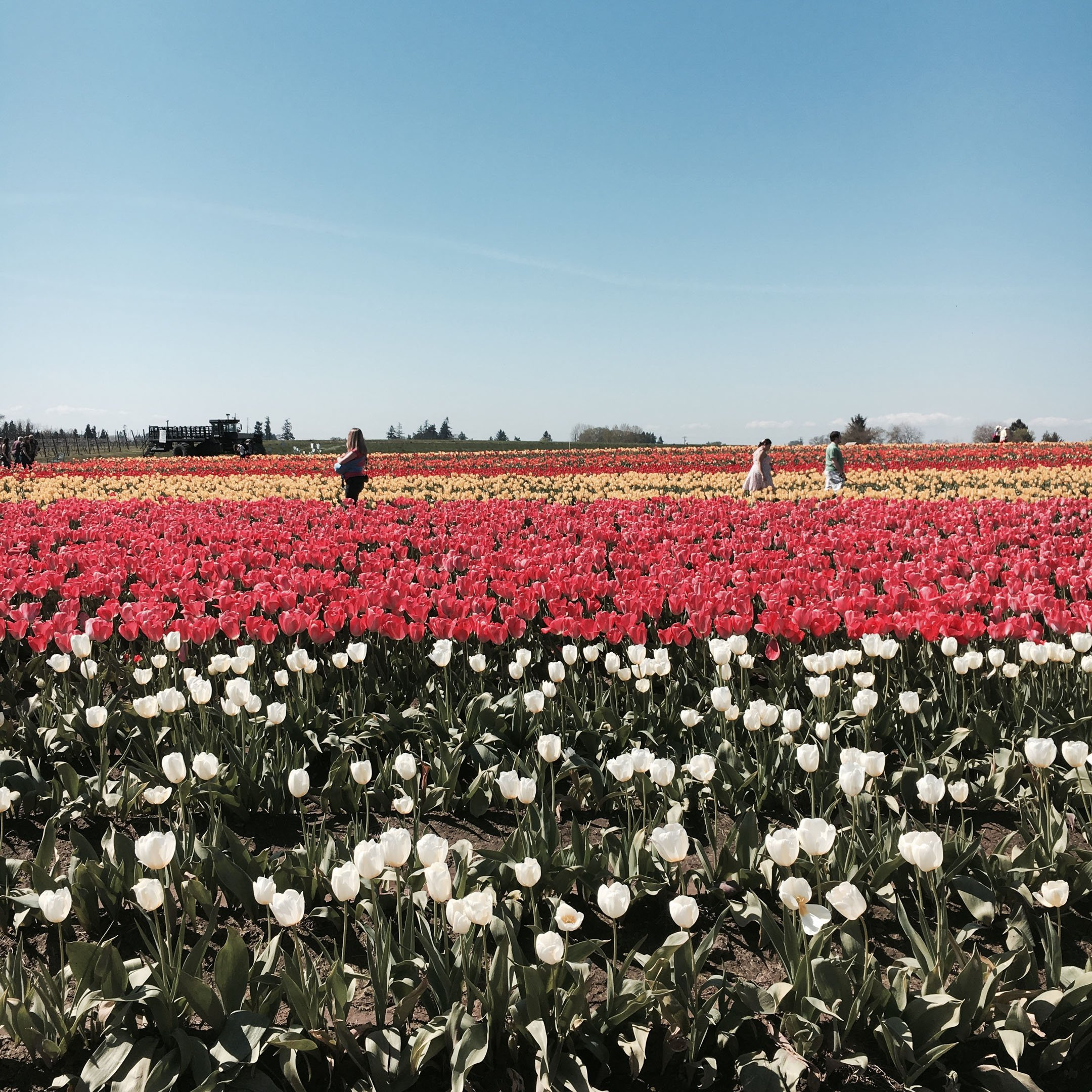 things-to-do-in-portland-oregon-wooden-tulip-farm