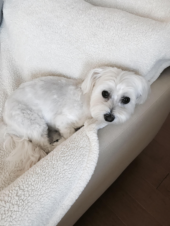 Lola in her spot