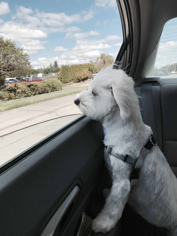 Lola in the car