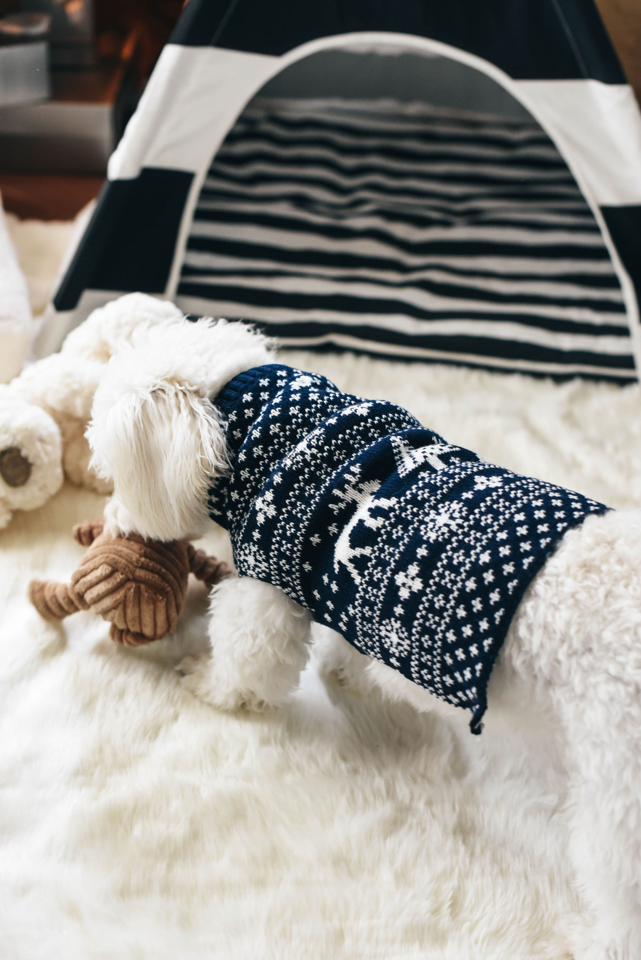 dog-fair-isle-sweater
