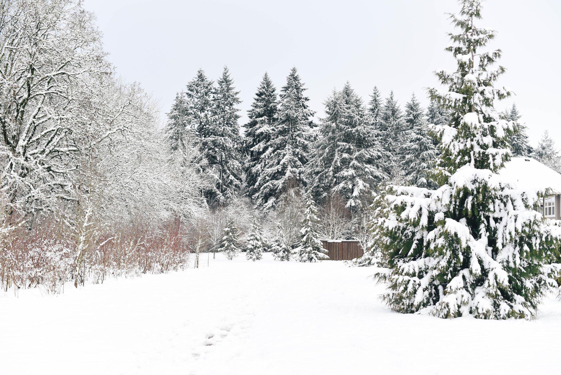 Portland Oregon snow