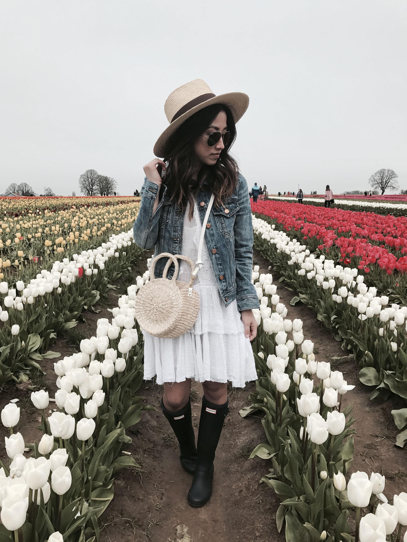 Woodburn tulip farm